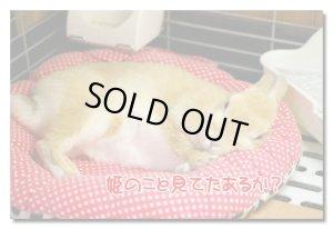 画像3: ココヤムクッション:ネル素材うさフェイス(水色) 【送料400円/個】