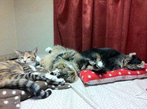 画像2: 2代目でか猫マット:椿と猫【送料500円/個】(裏:フリース)